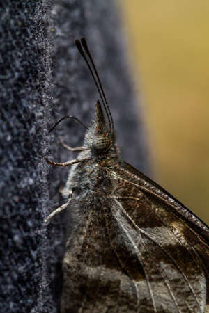 micro organism: Butterfly