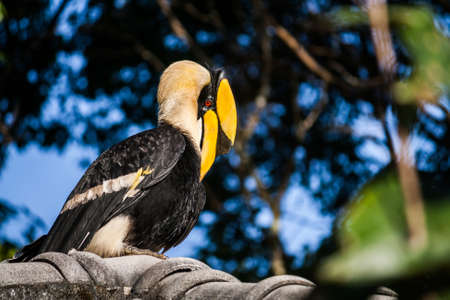 hornbill and forest