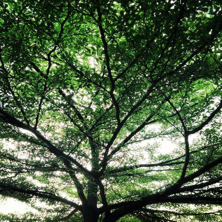 luscious: Green luscious tree