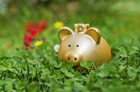 meanness: Golden piggy bank is hidden between green clover on a meadow.
