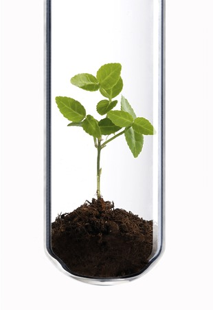 rennet: Small green plant in a test tube as a symbol of green biotechnology.