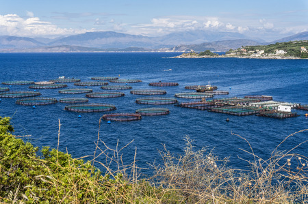 Aquaculture in a bay on the Greek island of Corfu Banque d'images - 106196504