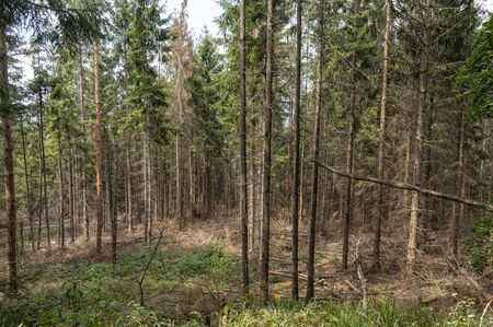 Forest damage due to drought and bark beetle in Germany