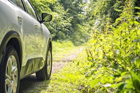 Side view of a car standing on a forest track.