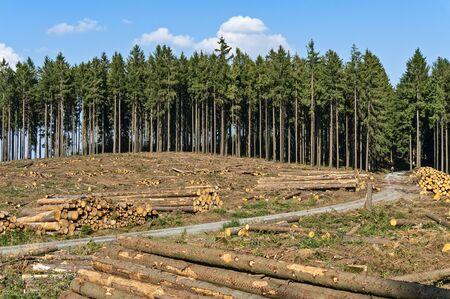 Because of forest damage deforested trees at Eichkopf in the Taunus near Sandplacken. 版權商用圖片