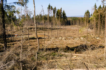 Deforestation of a forest area in Germany damaged by drought and pest infestation