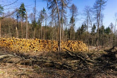 Clear cutting of a piece of forest in Germany damaged by drought and pest infestation