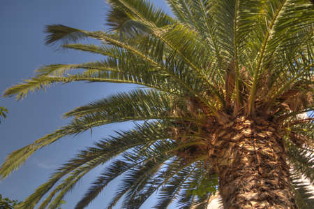 Palm tree, HDR photo  photo