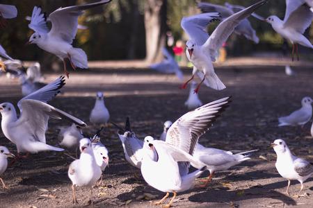 high def: Birds