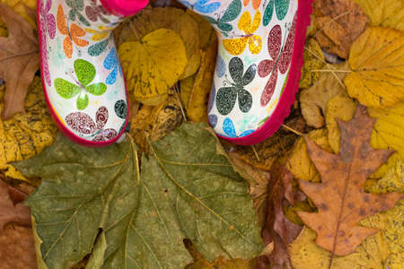 standing in dry autumn leaves photo
