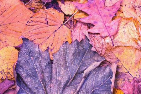 Autumn leafs Zdjęcie Seryjne
