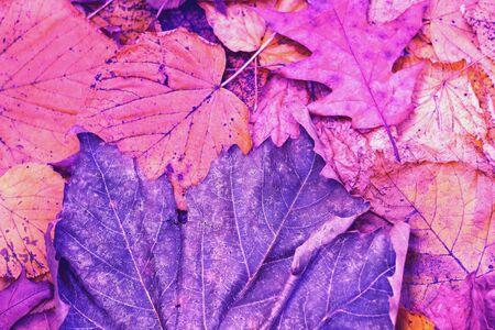 leafs Zdjęcie Seryjne