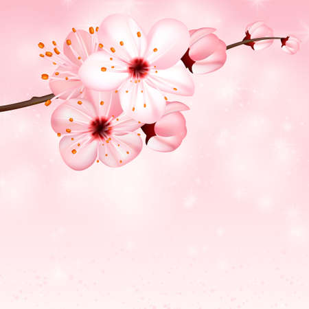Spring background with pink blossom flowers. Vector 3d illustration. Beautiful vernal floral banner, poster, flyer. Springtime blooming apple tree. close up of branch, petal over rose bokeh backdrop.
