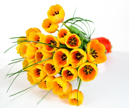 Tulips bouquet isolated on white Stock Photo - 13599690