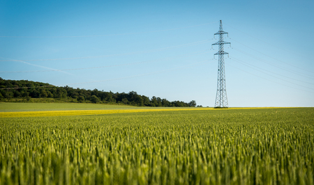 wheatfield: Electricity with wheatfield in summer