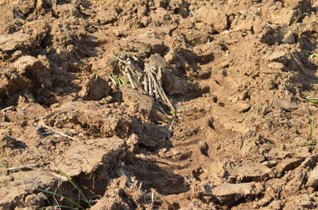 paddy field: Paddy field in dry season