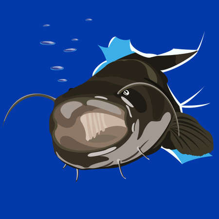illustration of angry catfish done in cartoon style.