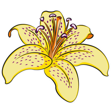 white patches: illustration of lily flower. Clip art.