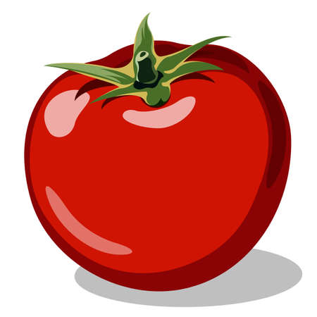 tomato plant: red ripe tomato vector illustration isolated on white backgroud