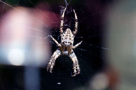 ploy: Spider on a spider web. Macro photo. Stock Photo