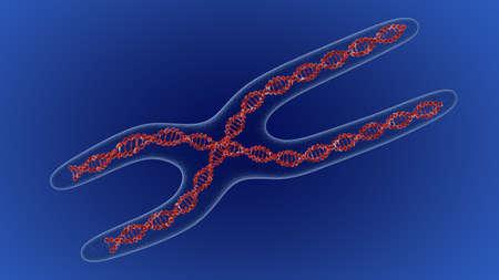 cromosoma: X chromosome . 3D render Foto de archivo
