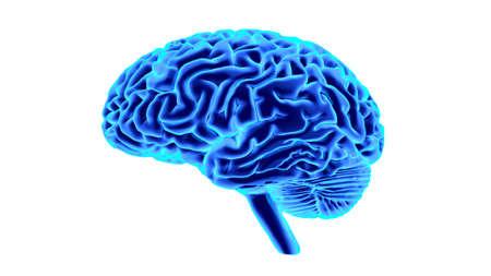 Human brain 3D render Stock Photo - 70293548