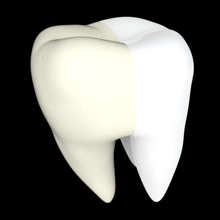 Human tooth 3D render isolated Stock Photo - 72264106