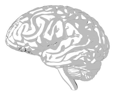 Human brain 3D render Stock Photo - 75810844