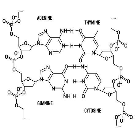 DNA molecule structure Illustration