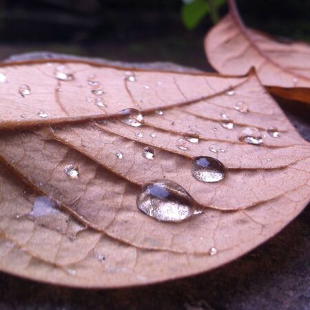 Fall leaves with a perfectly formed water drop.