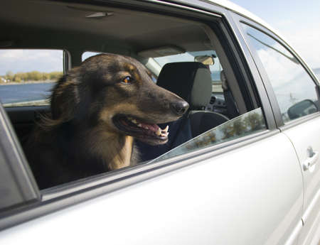 Car Ride for the Dog kijkt uit het raam