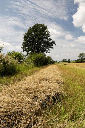 Cut hay on the farmer Stock Photo