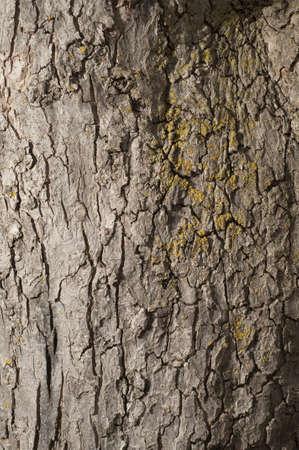 Apple boomschors grote van een achtergrond Stockfoto