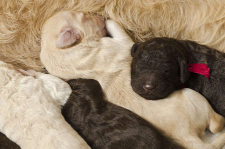 Selective focus on two of the puppies next to their mom