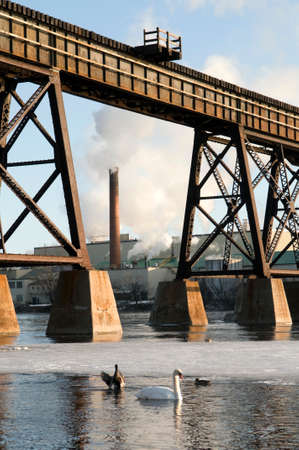 Swan and ducks in the foreground with train bridge and industry in the background. Stock Photo