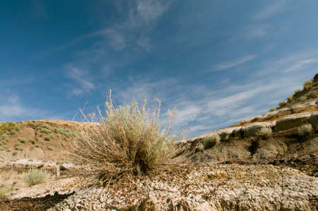 Selective focus on a small plant clinging onto life in the desert. Stock Photo