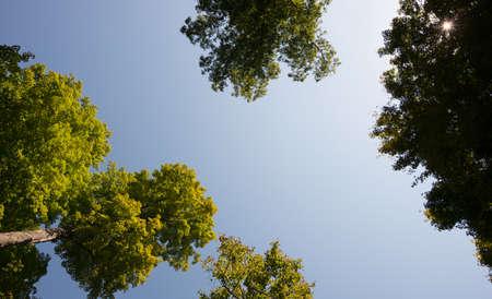 Kijken op het najaar van bomen met levendige kleuren vallen en de starburst zon door de bladeren
