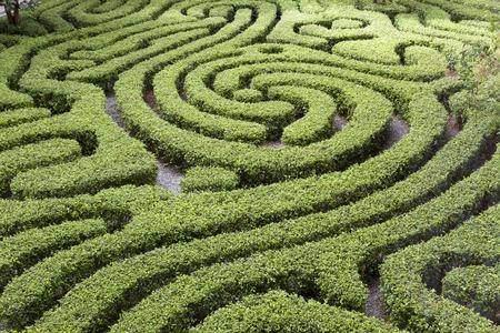 Ornamental Maze cut into hedge in Malaysian garden