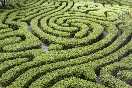 Ornamental Maze cut into hedge in Malaysian garden Reklamní fotografie - 34697115