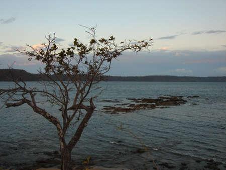 tree over ocean Stok Fotoğraf