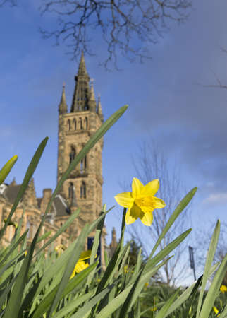 differential focus: Daffodil shown with differential focus near Glasgow University, Scotland