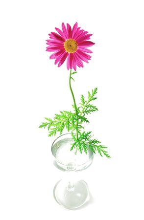 ゴブレットのカモミールの花 写真素材