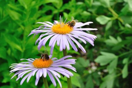 2 つの鎮静の花庭