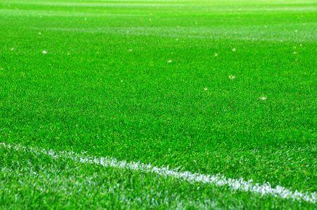 fluff: pelusa blanca sobre la hierba verde. campo para eventos deportivos. Foto de archivo