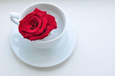 白い帽子の赤いバラ