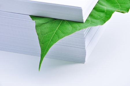 forestation: Leaf in stack of paper. Concept - the protection of the environment. Paper was a tree with green leaves. Call to reduce paper use.