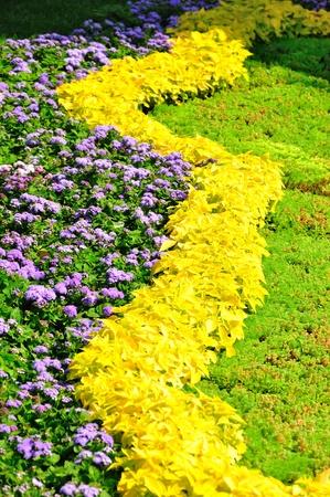 フルフレーム上の花のフィールドです。多くの異なった花。