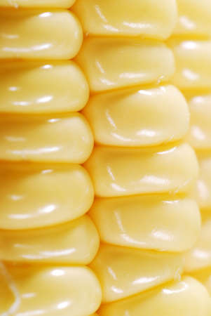 Fresh corn closeup background