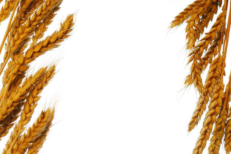 Wheat frame isolated on white background stock photo photo