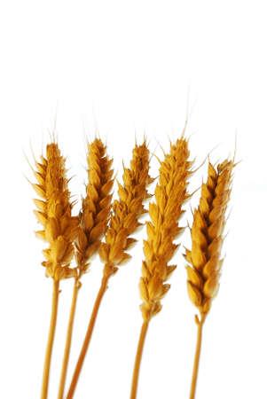 Wheat on white background stock photo Stock Photo